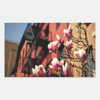 Magnolia Blossoms - New York City