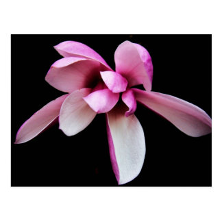 """""""magnolia"""" by Coressel Productions Postcard"""