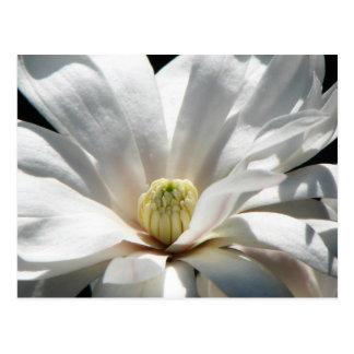Magnolia Centennial Postcard