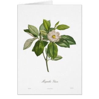 Magnolia glauca card
