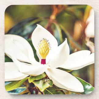 Magnolia in Bloom Coaster