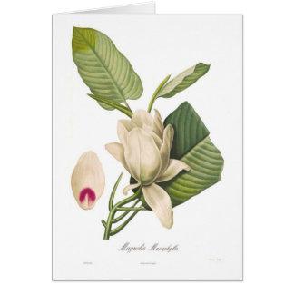 Magnolia macrophylla card