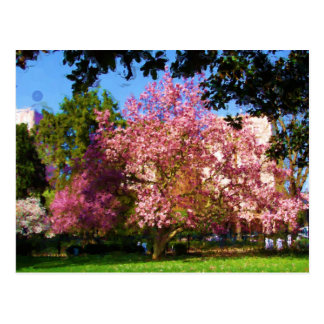 Magnolia Tree Postcard