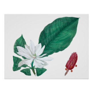 Magnolia White Large Flower Print Horizontal