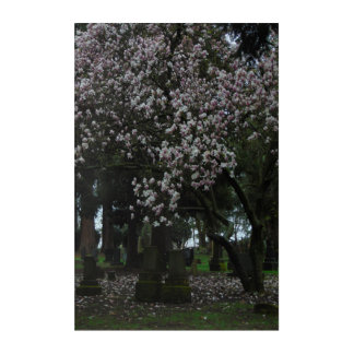 Magnolias Forever 24x36 Wall Art