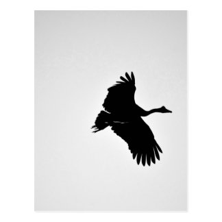 MAGPIE GEESE IN FLIGHT SILHOUETTE AUSTRALIA POSTCARD