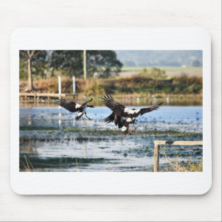 MAGPIE GEESE QUEENSLAND AUSTRALIA MOUSE PAD