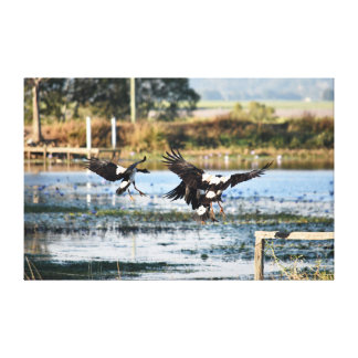 MAGPIE GEESE RURAL QUEENSLAND AUSTRALIA CANVAS PRINT