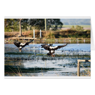 MAGPIE GEESE RURAL QUEENSLAND AUSTRALIA CARD