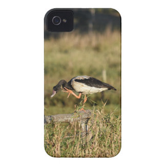 MAGPIE GEESE RURAL QUEENSLAND AUSTRALIA iPhone 4 COVER