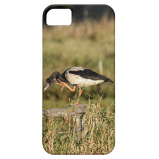 MAGPIE GEESE RURAL QUEENSLAND AUSTRALIA iPhone 5 COVER