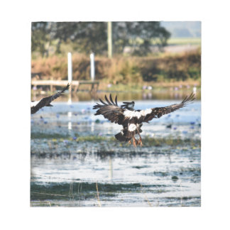 MAGPIE GEESE RURAL QUEENSLAND AUSTRALIA NOTEPAD