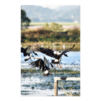MAGPIE GEESE RURAL QUEENSLAND AUSTRALIA STATIONERY