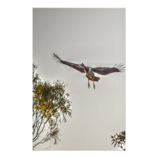 MAGPIE GOOSE AUSTRALIA ART EFFECTS STATIONERY