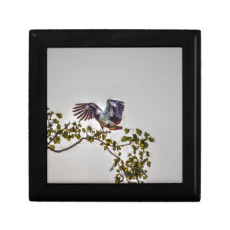 MAGPIE GOOSE IN FLIGHT AUSTRALIA ART EFFECTS GIFT BOX