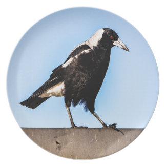 Magpie on a party plates