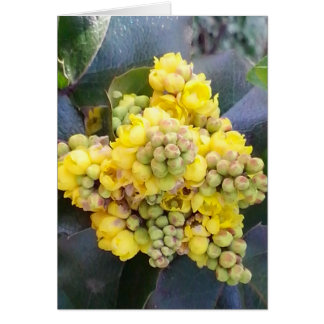 Mahonie; Oregon Grape map Card