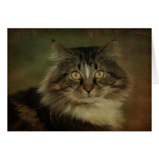 Main Coon Cat Notecard