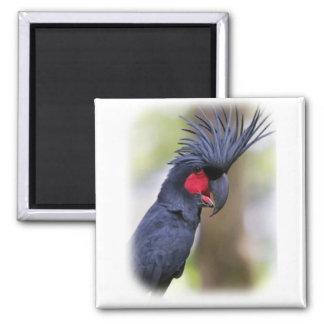 Main Palm COCKATOO Pet Bird Magnet