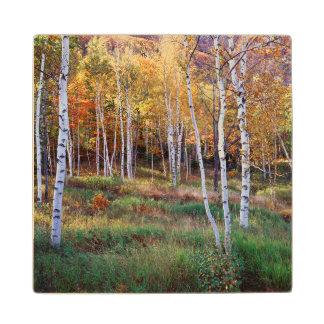 Maine, Acadia National Park, Autumn Maple Wood Coaster