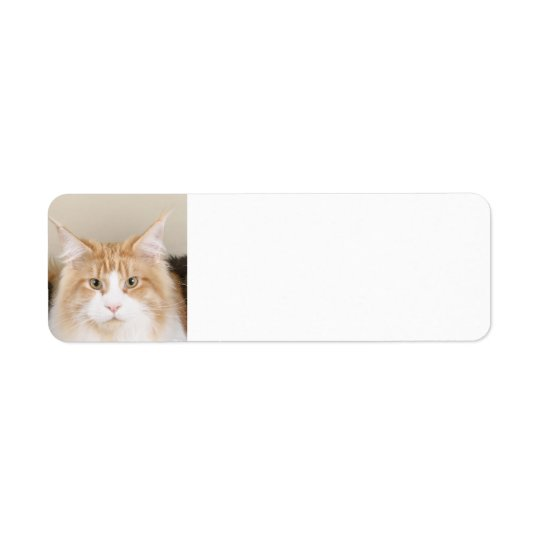 maine coon 3