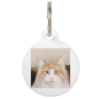 maine coon 3 pet tag