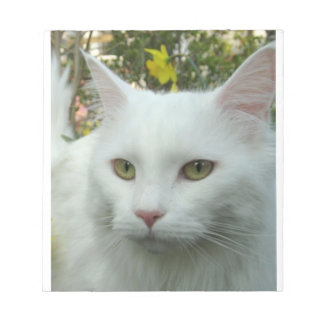maine coon 4 notepad