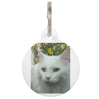 maine coon 4 pet name tag
