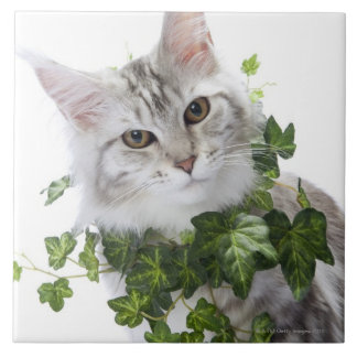 Maine Coon cat and ornament of ivy Tile