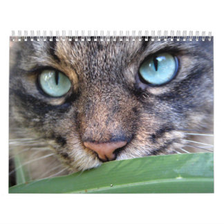 Maine Coon Cat Calendars