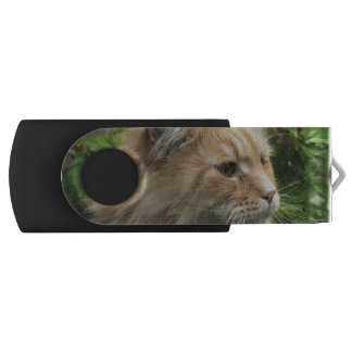 Maine Coon Cat Kato USB Flash Drive