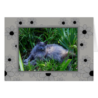 Maine Coon Cat Note  Card / Blank Inside