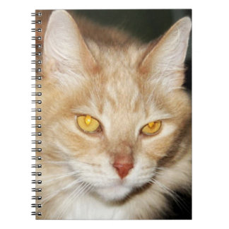 Maine Coon Cat Notebooks