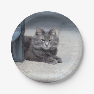 Maine Coon Cat Photo 7 Inch Paper Plate