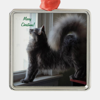 Maine Coon Cat Photo Silver-Colored Square Ornament
