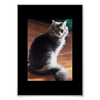 Maine Coon Cat Poster