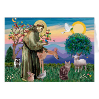 Maine Coon Cat  - St Francis Card