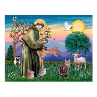 Maine Coon Cat  - St Francis Postcard