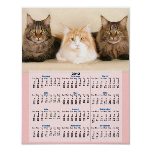Maine coon cats 2012 calendar poster