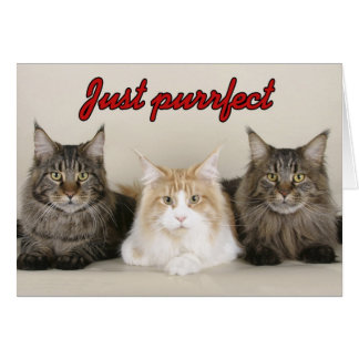 Maine Coon Cats Card