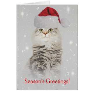 Maine Coon Christmas Card