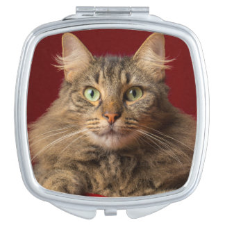 Maine Coon for Christmas with collector Mirror For Makeup