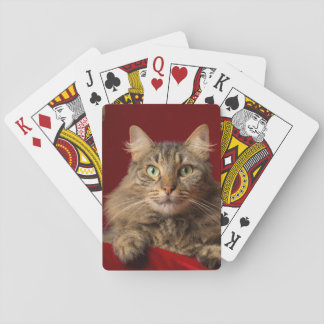 Maine Coon for Christmas with collector Playing Cards