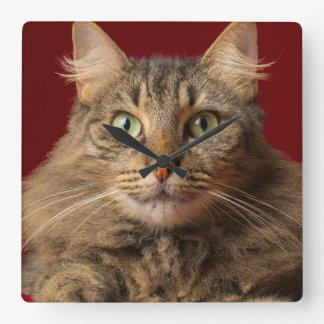 Maine Coon for Christmas with collector Square Wall Clock