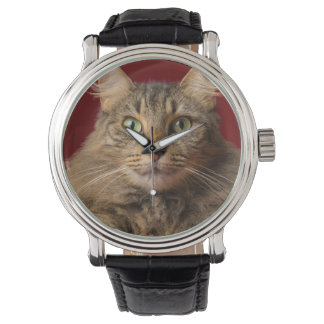Maine Coon for Christmas with collector Watches