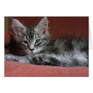 Maine Coon kitten, a sleepy young puss Card