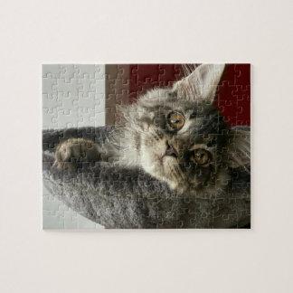 Maine Coon Kitten Jigsaw Puzzle