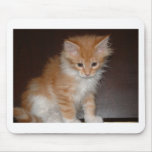 maine coon kitten.png mouse pad