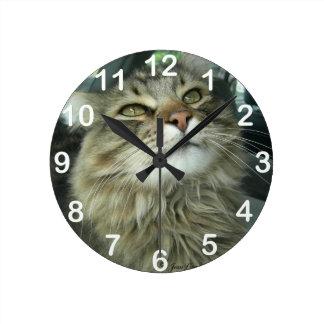 Maine Coon kitty Clocks