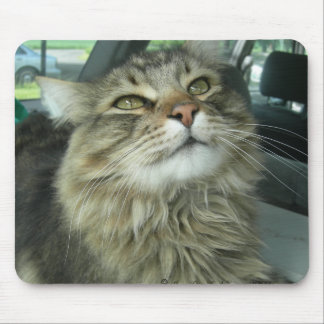 Maine Coon kitty Mouse Pad